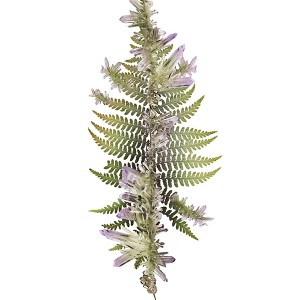 Fern_Purple